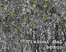 visionidalbosco